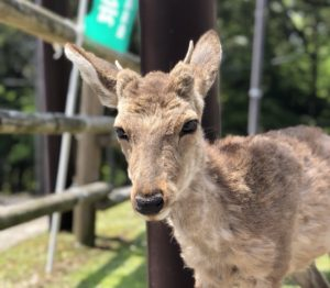 歴史好きこそ奈良に行こう!おすすめ観光スポットベスト3!